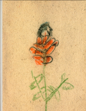 Martin Zet: A Flower Bloomed From The Rose